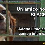 Animali. Bonus per le adozioni
