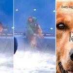 """PETA boicottare il film """"Qua la zampa"""""""